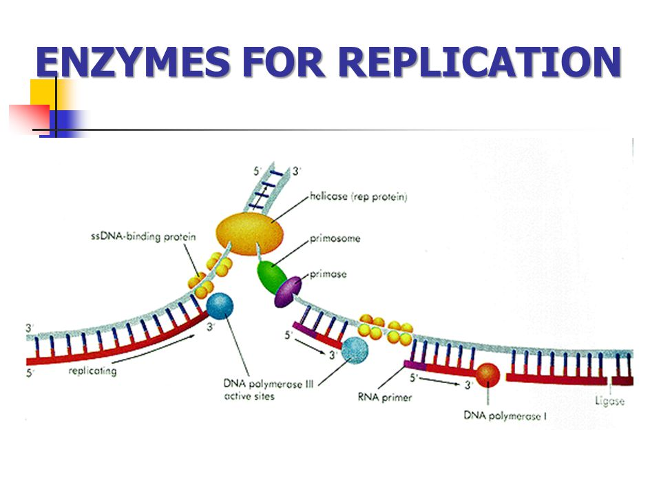 ENZYMES FOR REPLICATION