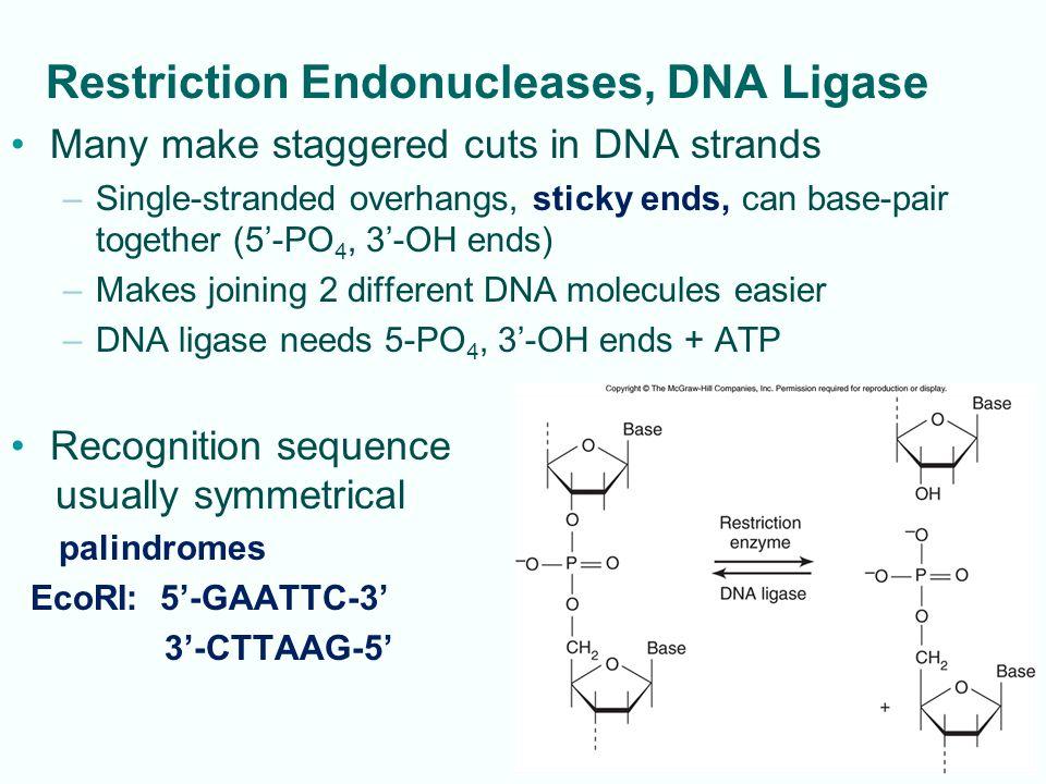 4-25 Making cDNA Library from eukaryotic mRNA Fig.