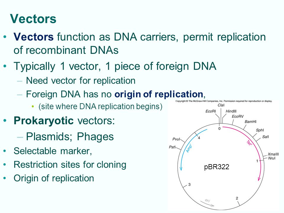 4-28 Polymerase chain reaction (PCR): amplifies DNA exponentially; yields DNA fragments for cloning, forensics, diagnostics Fig.