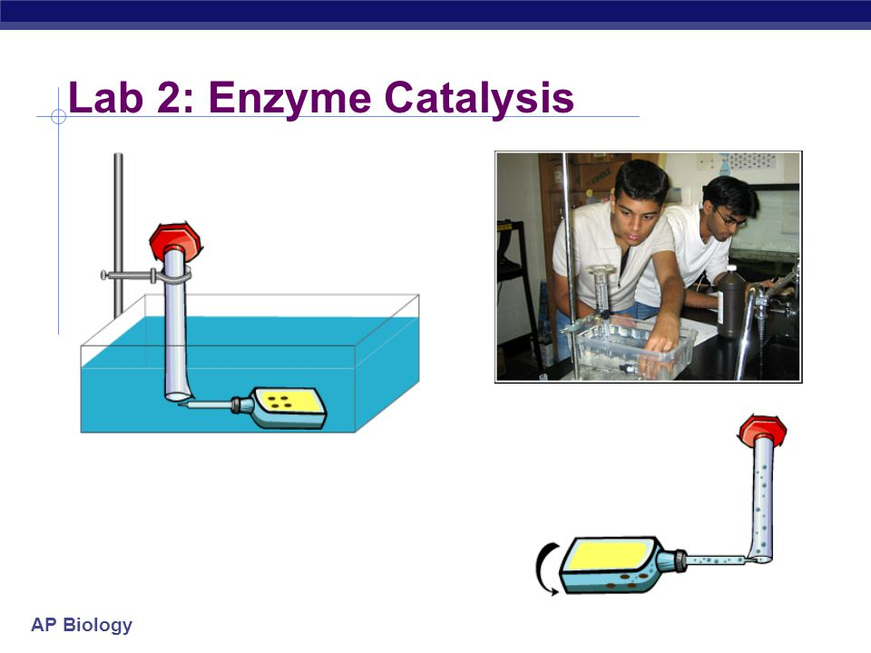AP Biology Lab 2: Enzyme Catalysis