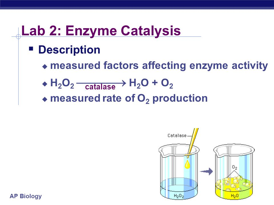 AP Biology Lab 2: Enzyme Catalysis  Description  measured factors affecting enzyme activity  H 2 O 2  H 2 O + O 2  measured rate of O 2 production catalase
