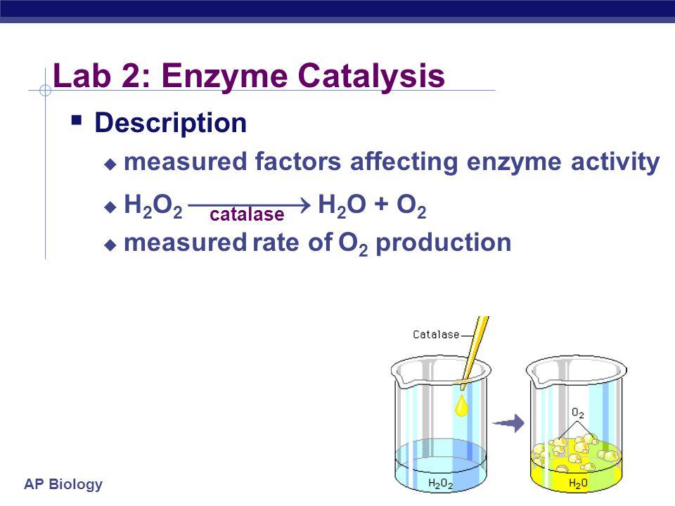AP Biology Lab 3: Mitosis & Meiosis