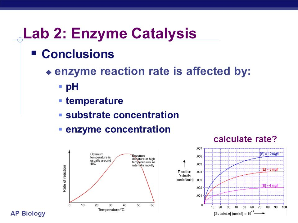 AP Biology Lab 2: Enzyme Catalysis  Conclusions  enzyme reaction rate is affected by:  pH  temperature  substrate concentration  enzyme concentration calculate rate?