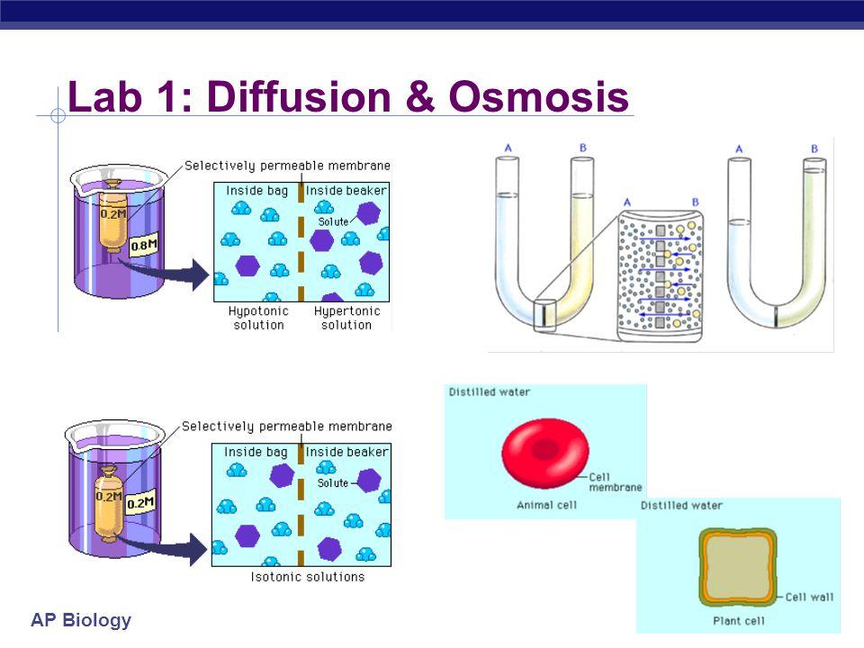 AP Biology Lab 1: Diffusion & Osmosis