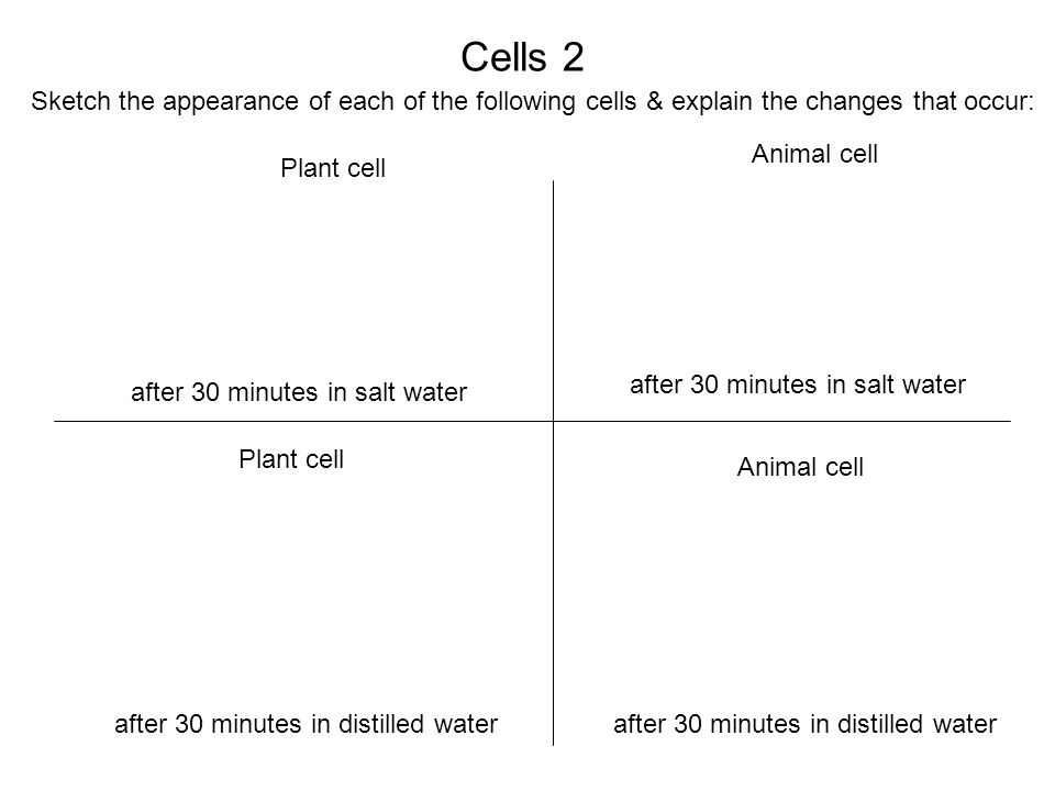 Cells 2 after 30 minutes in salt water after 30 minutes in distilled water Plant cell Animal cell Sketch the appearance of each of the following cells & explain the changes that occur: