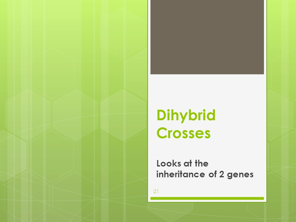Dihybrid Crosses Looks at the inheritance of 2 genes 21