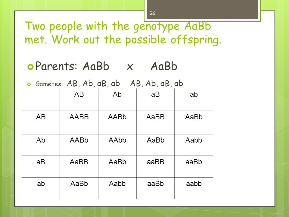 Two people with the genotype AaBb met. Work out the possible offspring.  Parents: AaBb x AaBb  Gametes: AB, Ab, aB, ab AB, Ab, aB, ab ABAbaBab ABAAB