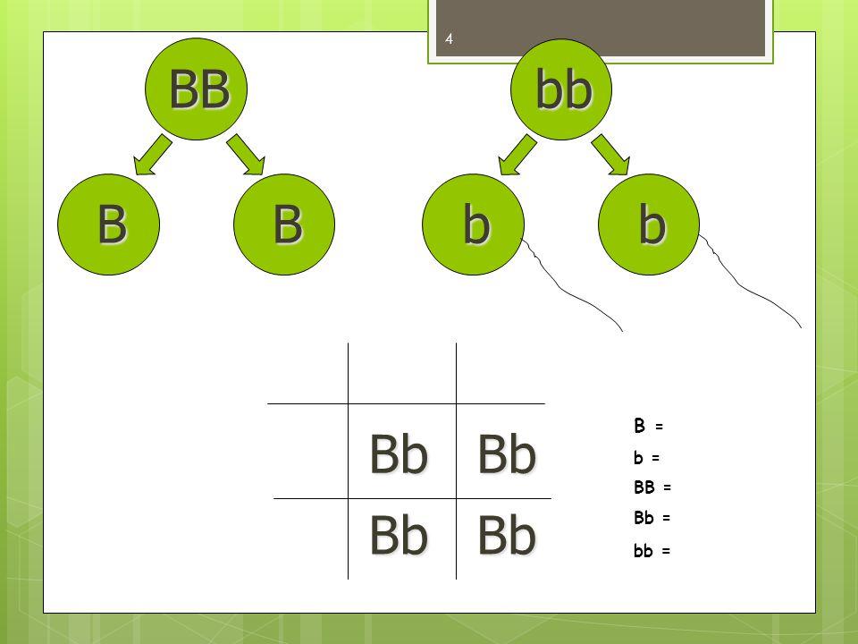 BB BB bb bb Bb BbBb Bb B = b = BB = Bb = bb = 4