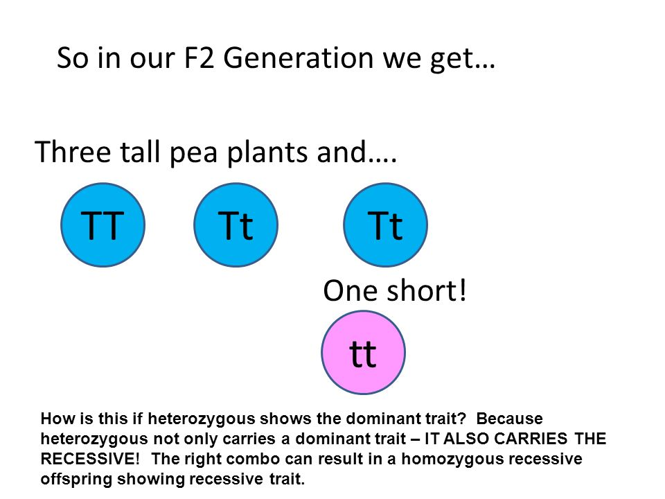 So in our F2 Generation we get… TTTt tt Three tall pea plants and….