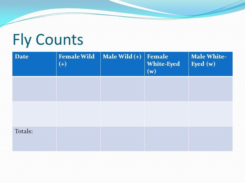 Fly Counts DateFemale Wild (+) Male Wild (+)Female White-Eyed (w) Male White- Eyed (w) Totals: