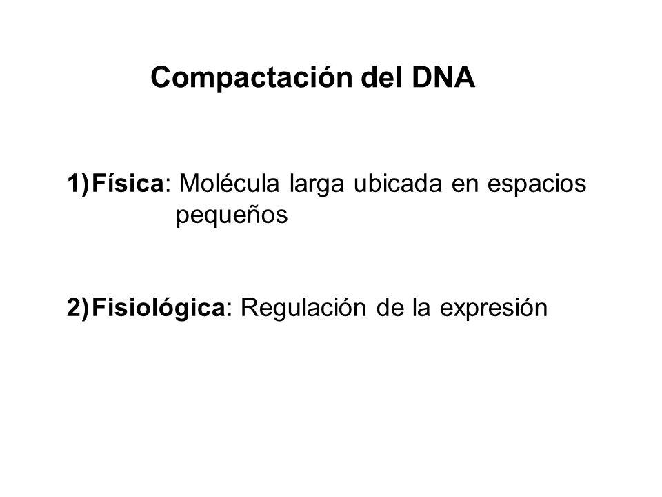 1)Física: Molécula larga ubicada en espacios pequeños 2)Fisiológica: Regulación de la expresión Compactación del DNA