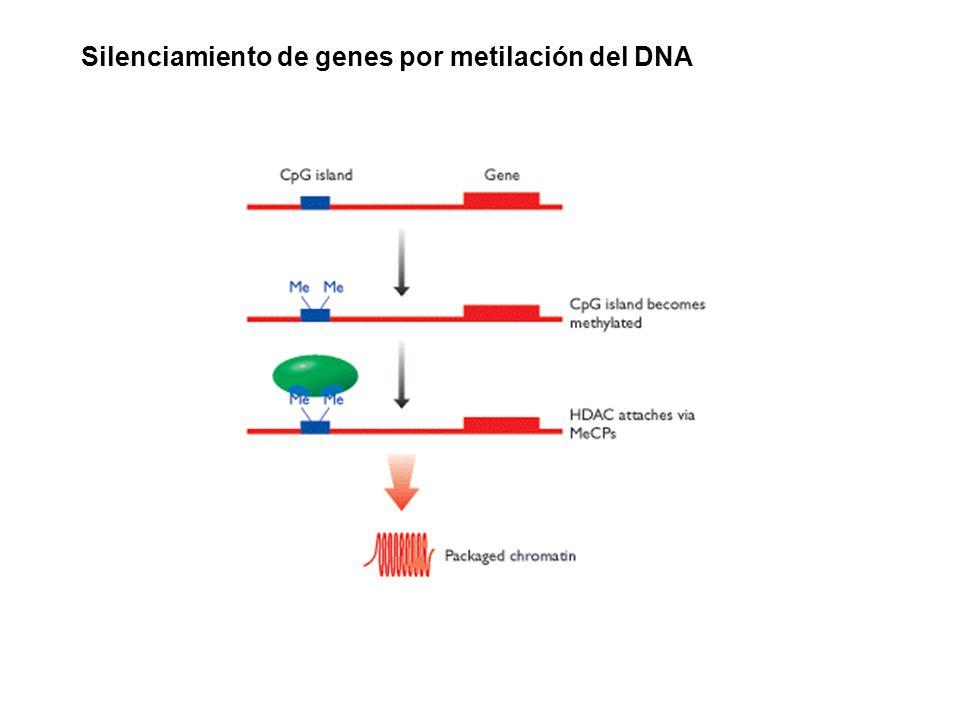 Silenciamiento de genes por metilación del DNA