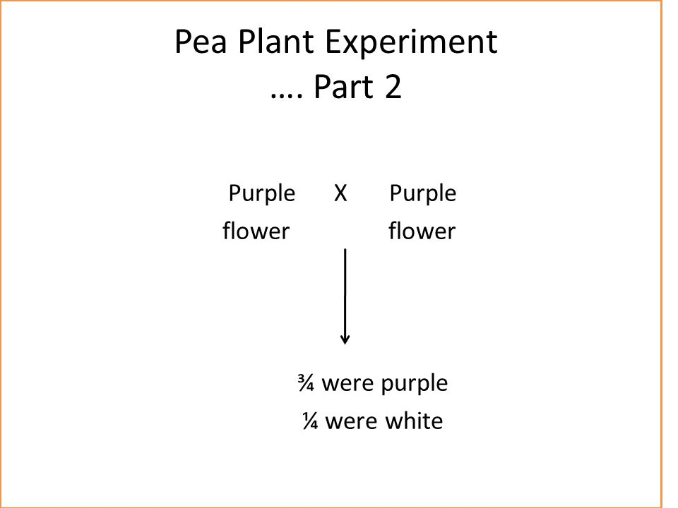 Pea Plant Experiment …. Part 2 Purple X Purple flower flower ¾ were purple ¼ were white