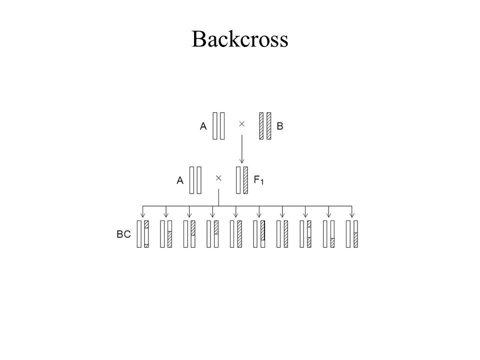 Backcross