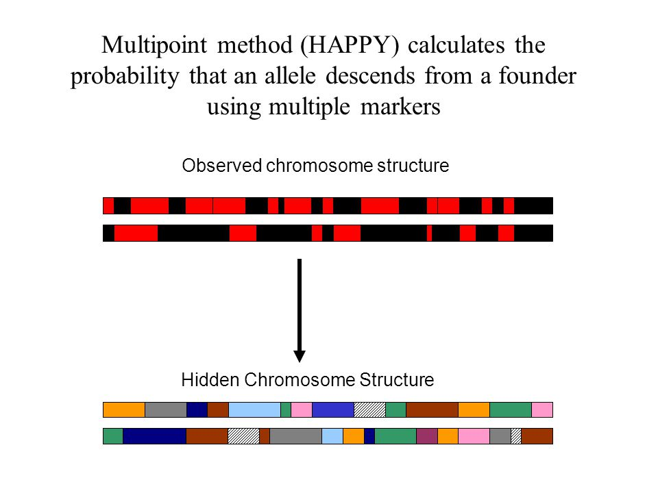 Hidden Chromosome Structure Observed chromosome structure Multipoint method (HAPPY) calculates the probability that an allele descends from a founder using multiple markers