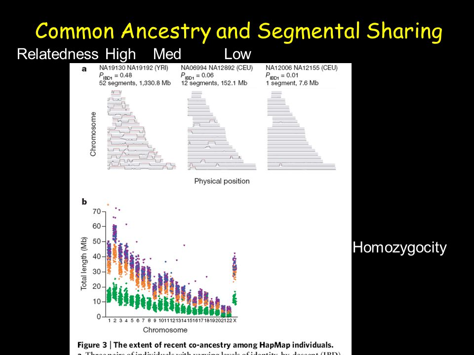Common Ancestry and Segmental Sharing Relatedness High Med Low Homozygocity