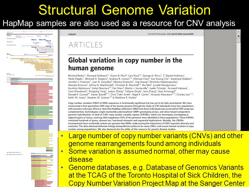 Structural Genome Variation Large number of copy number variants (CNVs) and other genome rearrangements found among individuals Some variation is assumed normal, other may cause disease Genome databases, e.g.