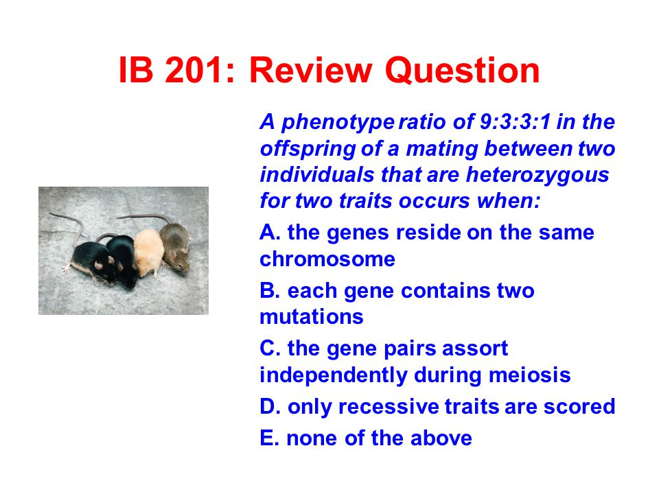 IB 201: Review Question A phenotype ratio of 9:3:3:1 in the offspring of a mating between two individuals that are heterozygous for two traits occurs