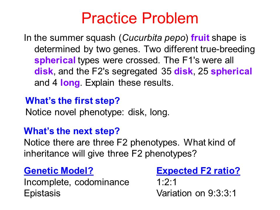 Practice Problem In the summer squash (Cucurbita pepo) fruit shape is determined by two genes. Two different true-breeding spherical types were crosse