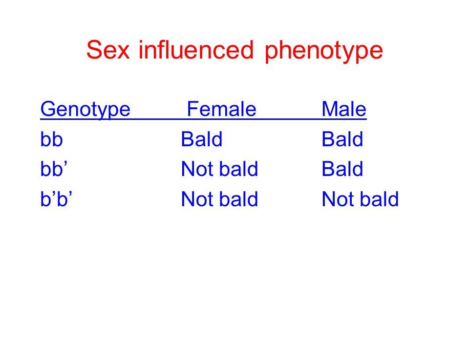 Sex influenced phenotype Genotype FemaleMale bbBaldBald bb'Not baldBald b'b'Not baldNot bald