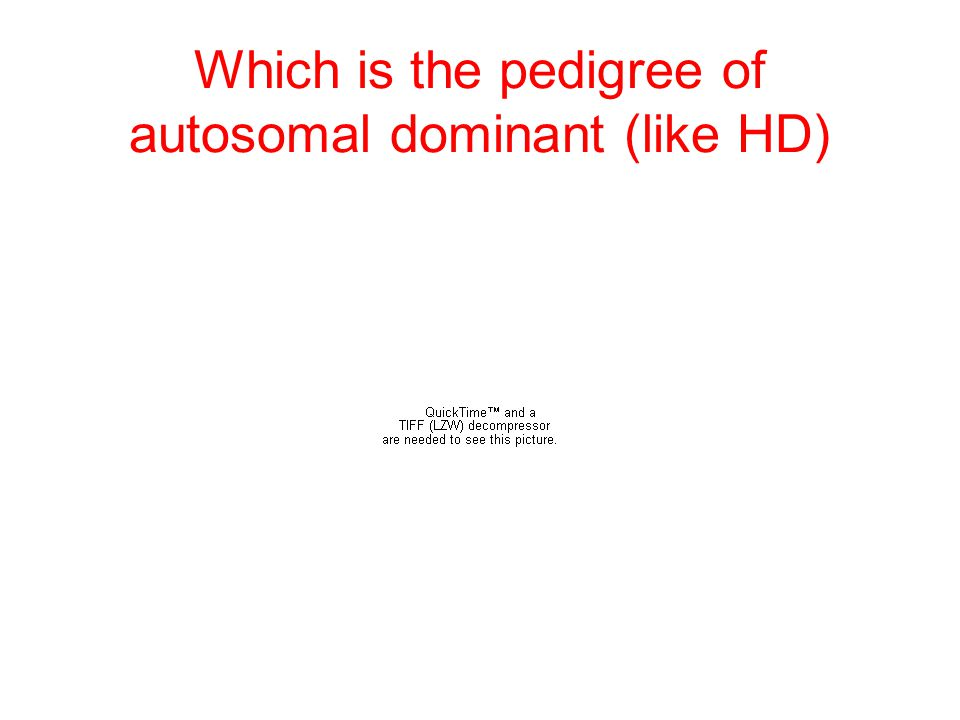 Which is the pedigree of autosomal dominant (like HD)