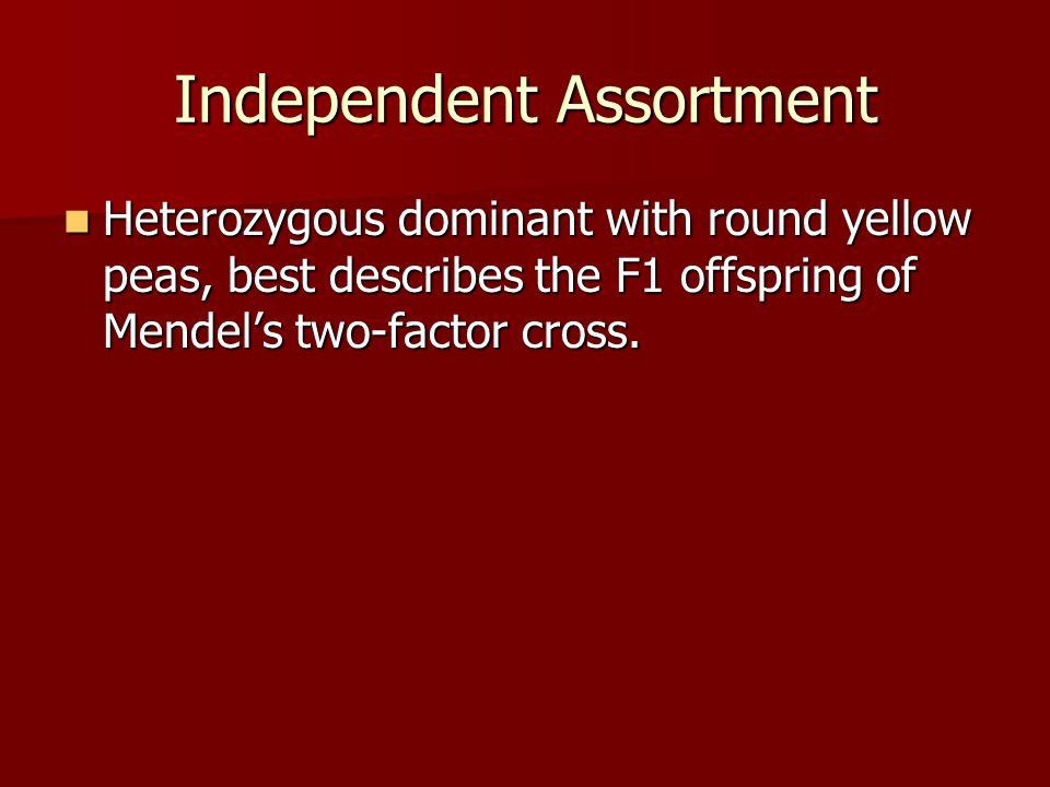 Independent Assortment Heterozygous dominant with round yellow peas, best describes the F1 offspring of Mendel's two-factor cross. Heterozygous domina