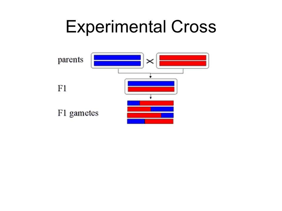Experimental Cross