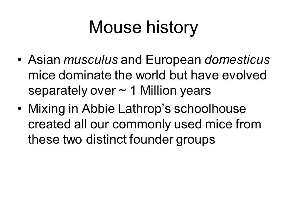 Asian musculus and European domesticus mice dominate the world but have evolved separately over ~ 1 Million years Mixing in Abbie Lathrop's schoolhouse created all our commonly used mice from these two distinct founder groups