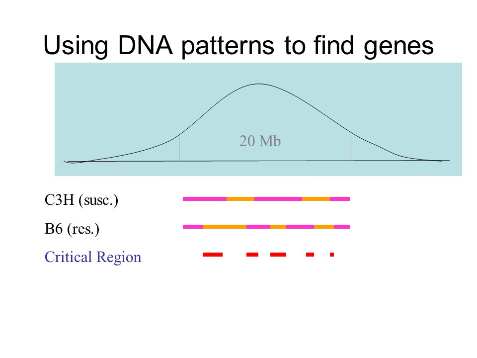 Using DNA patterns to find genes C3H (susc.) B6 (res.) Critical Region 20 Mb