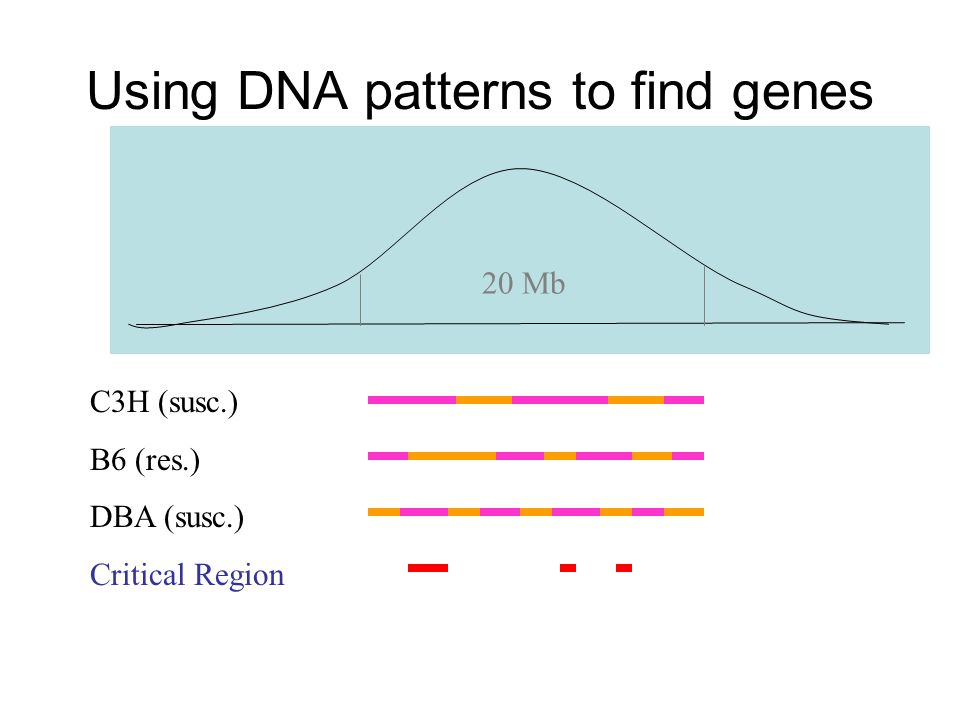Using DNA patterns to find genes C3H (susc.) B6 (res.) DBA (susc.) Critical Region 20 Mb