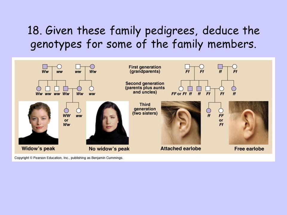 18. Given these family pedigrees, deduce the genotypes for some of the family members.