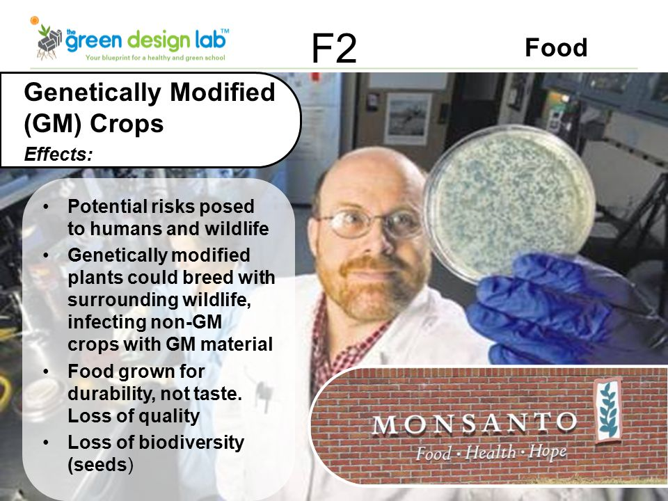 Food F2 Genetically Modified (GM) Crops Effects: Potential risks posed to humans and wildlife Genetically modified plants could breed with surrounding wildlife, infecting non-GM crops with GM material Food grown for durability, not taste.
