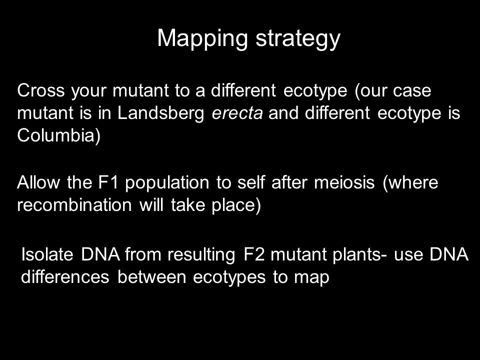 Once you have narrowed down your mapping region to <30 genes, you can take a candidate gene approach Sequence genes in region and compare to wild-type sequence in publicly available database (TAIR, NCBI) If mutation is found, have to confirm it is the right gene -sequence a second allele if available -order an insertion line and compare the phenotype -attempt to rescue the mutant with a wild-type version of the candidate gene