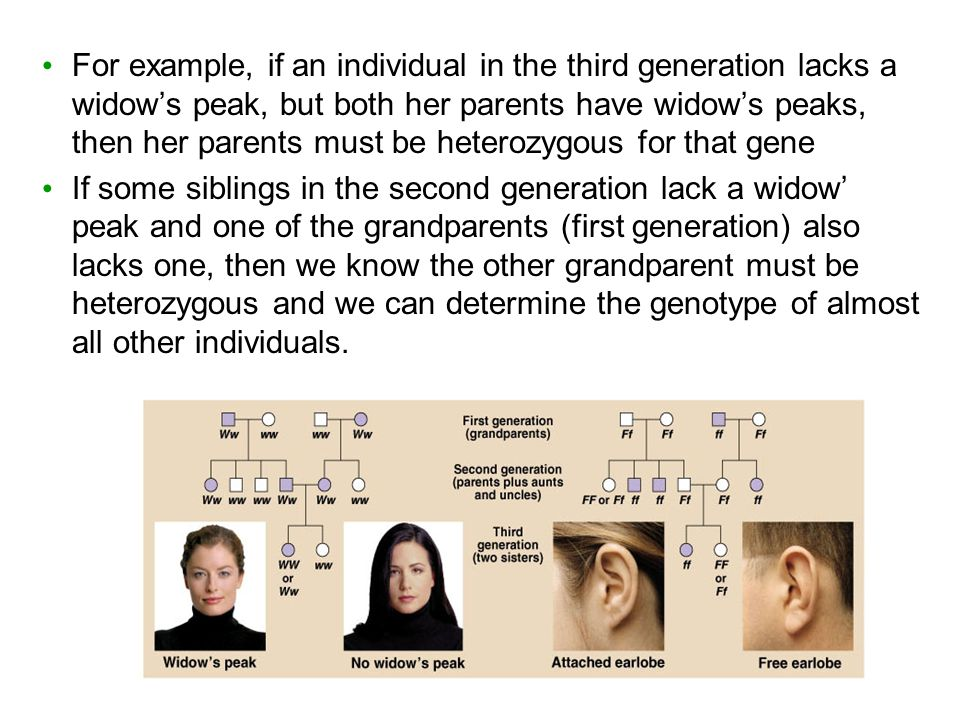 For example, if an individual in the third generation lacks a widow's peak, but both her parents have widow's peaks, then her parents must be heterozygous for that gene If some siblings in the second generation lack a widow' peak and one of the grandparents (first generation) also lacks one, then we know the other grandparent must be heterozygous and we can determine the genotype of almost all other individuals.