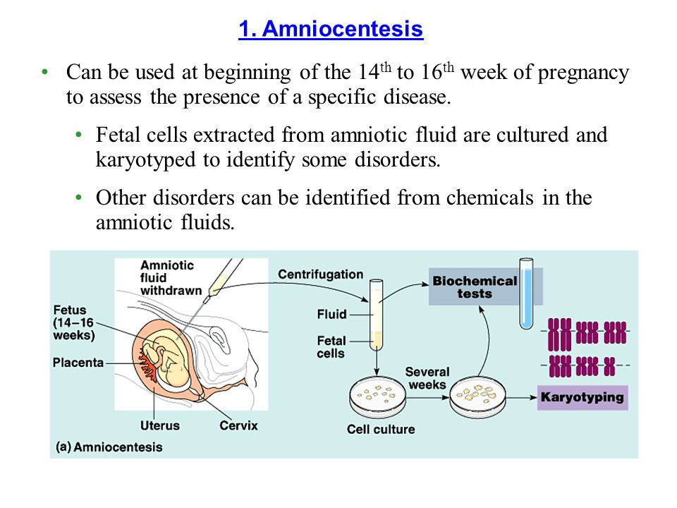 Can be used at beginning of the 14 th to 16 th week of pregnancy to assess the presence of a specific disease. Fetal cells extracted from amniotic flu