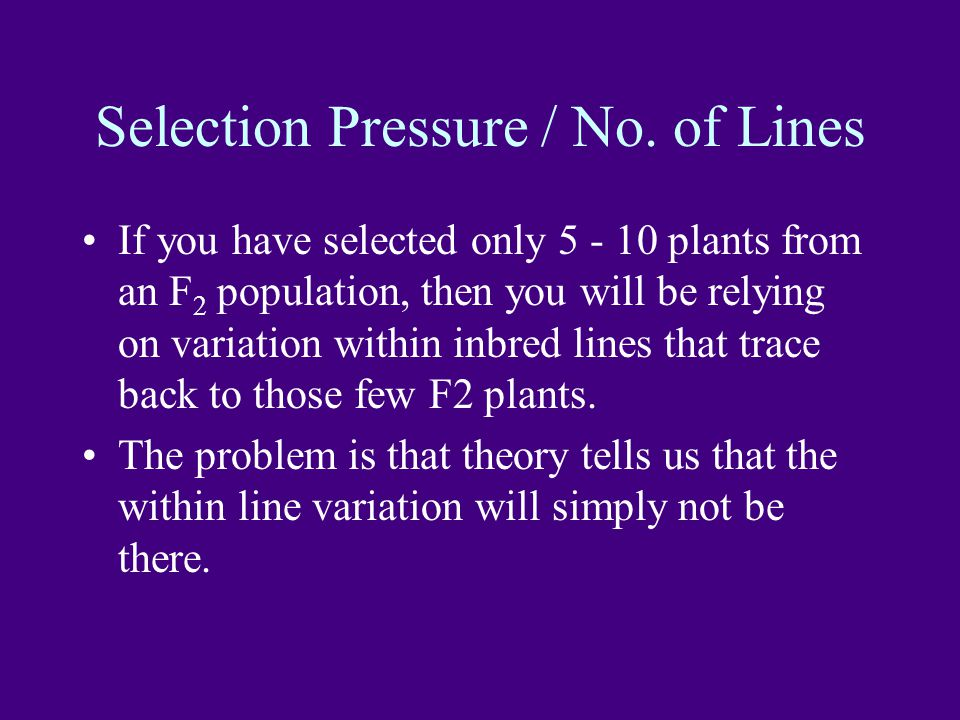 Selection Pressure / No.