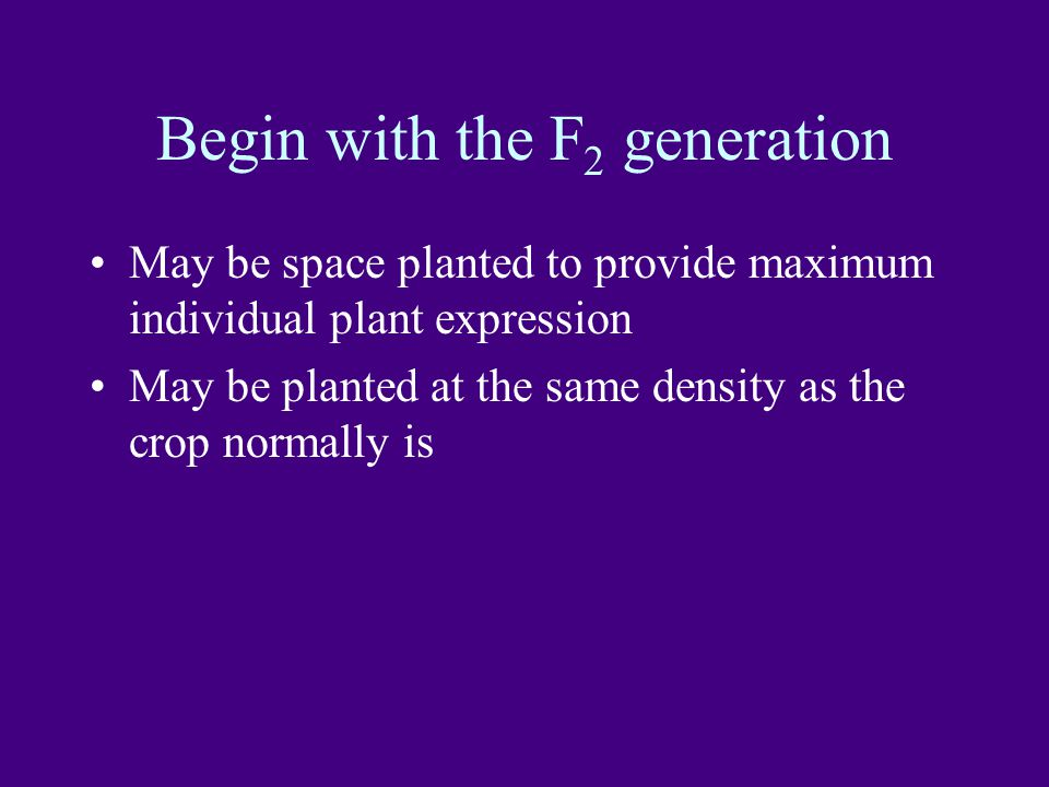 Begin with the F 2 generation May be space planted to provide maximum individual plant expression May be planted at the same density as the crop normally is