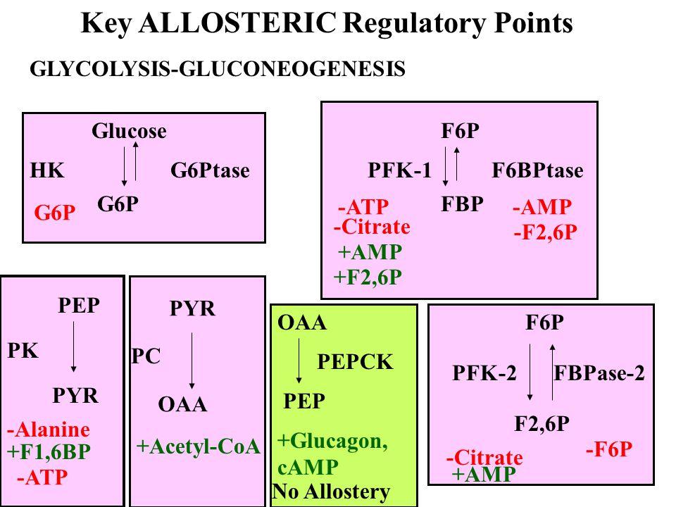 Energy in Glucose (Aerobic) GlucoseF1,6BP:-2 ATP F1,6BP2 Pyr:4 ATP 2 NADH6 ATP 2Pyr 2Acetyl-CoA: 2NADH = 6 ATP 2Acetyl-CoA 4CO 2 24 ATP 38 ATP Mitochondria C 6 H 12 O 6 + 6O 2 6CO 2 + 6H 2 O  G o' = -2,850 kJ/mol Conserved = 38 ATP x 30.5 kJ/ATP = 1,159 kJ Efficiency = 40.7%