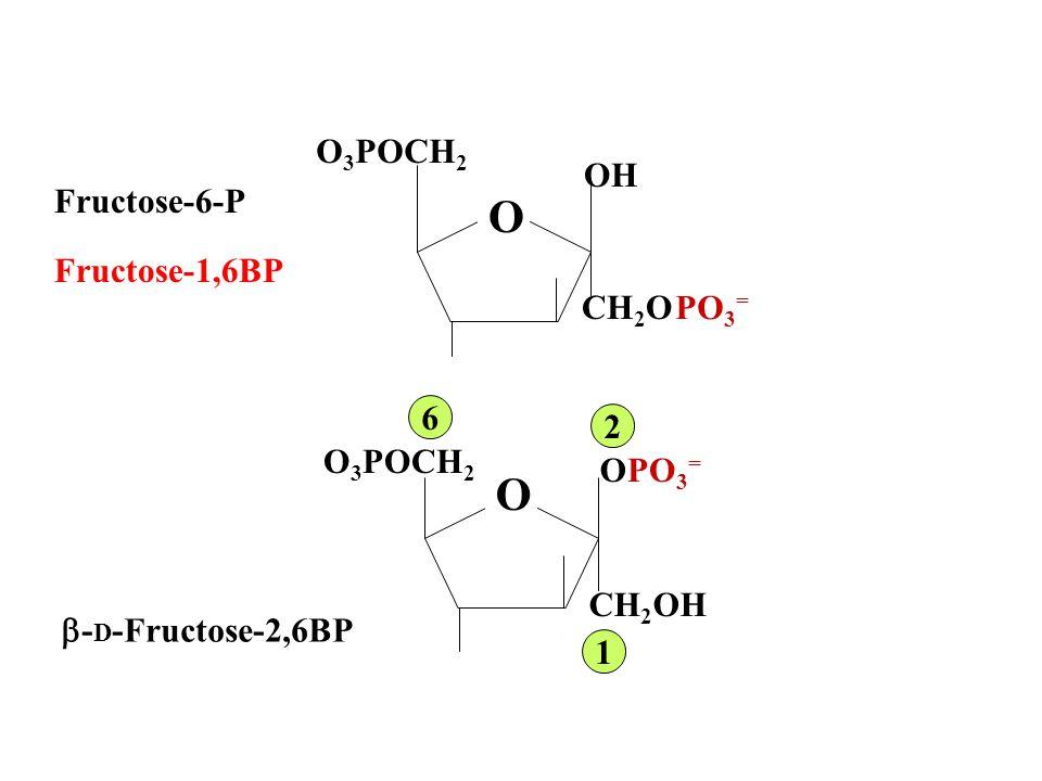 Fructose 2,6 Bisphosphate STIMULATES GLYCOLYSIS INHIBITS GLUCONEOGENESIS