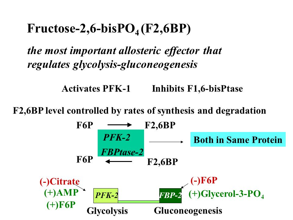 Hormonal Control of F2,6BP Liver PFK2 (a) PFK2 (b) FBPase2 (b) FBPase2 (a) ATP ADP P P cAPK Kinase Phosphatase See P.