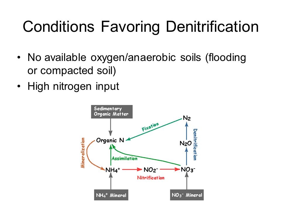 Conditions Favoring Denitrification No available oxygen/anaerobic soils (flooding or compacted soil) High nitrogen input
