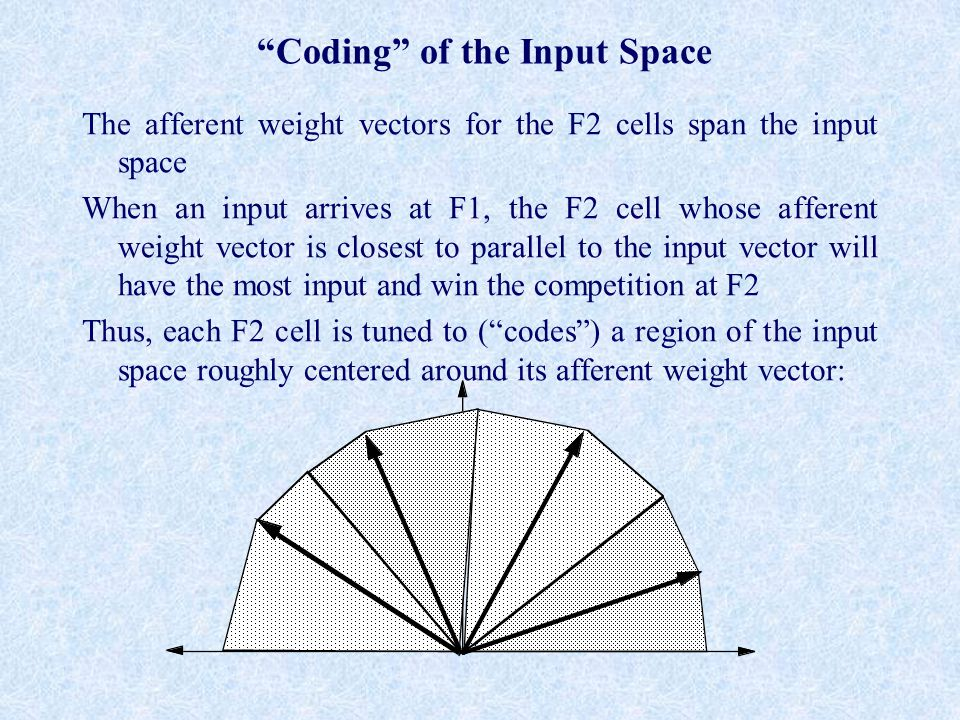 Coding of the Input Space The afferent weight vectors for the F2 cells span the input space When an input arrives at F1, the F2 cell whose afferent weight vector is closest to parallel to the input vector will have the most input and win the competition at F2 Thus, each F2 cell is tuned to ( codes ) a region of the input space roughly centered around its afferent weight vector: