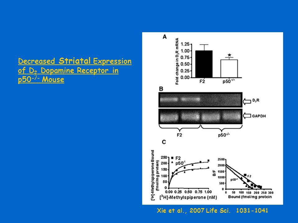 Decreased Striatal Expression of D 2 Dopamine Receptor in p50 -/- Mouse Xie et al., 2007 Life Sci. 1031-1041