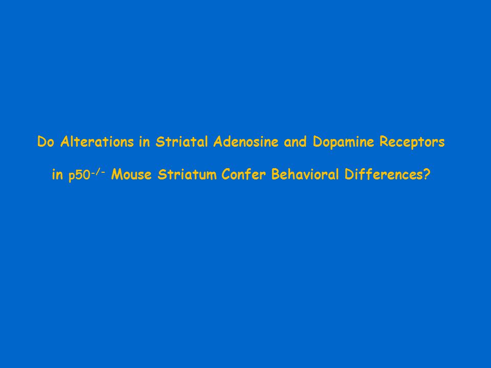 Do Alterations in Striatal Adenosine and Dopamine Receptors in p50 - /- Mouse Striatum Confer Behavioral Differences