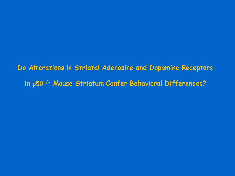 Do Alterations in Striatal Adenosine and Dopamine Receptors in p50 - /- Mouse Striatum Confer Behavioral Differences?