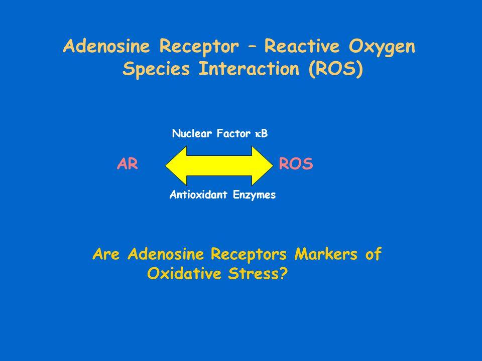 ARROS Antioxidant Enzymes Nuclear Factor  B Adenosine Receptor – Reactive Oxygen Species Interaction (ROS) Are Adenosine Receptors Markers of Oxidati