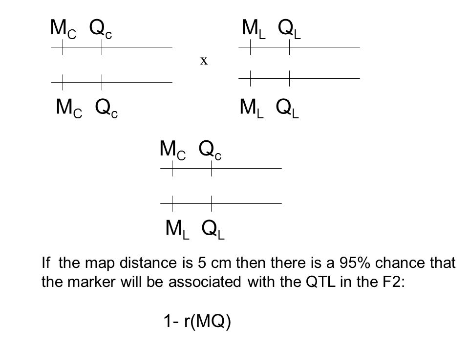 M C Q c M L Q L M C Q c x M L Q L If the map distance is 5 cm then there is a 95% chance that the marker will be associated with the QTL in the F2: 1- r(MQ)