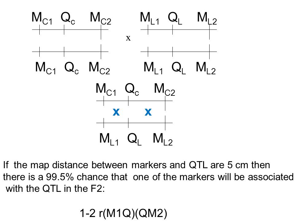 M C1 Q c M C2 x If the map distance between markers and QTL are 5 cm then there is a 99.5% chance that one of the markers will be associated with the