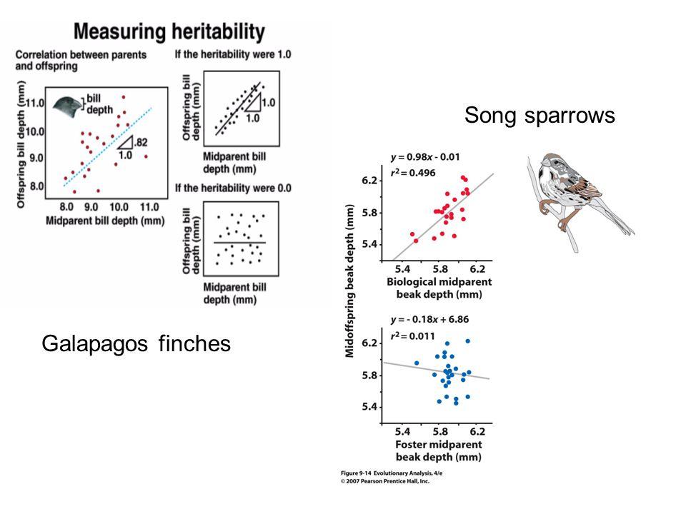 Song sparrows Galapagos finches
