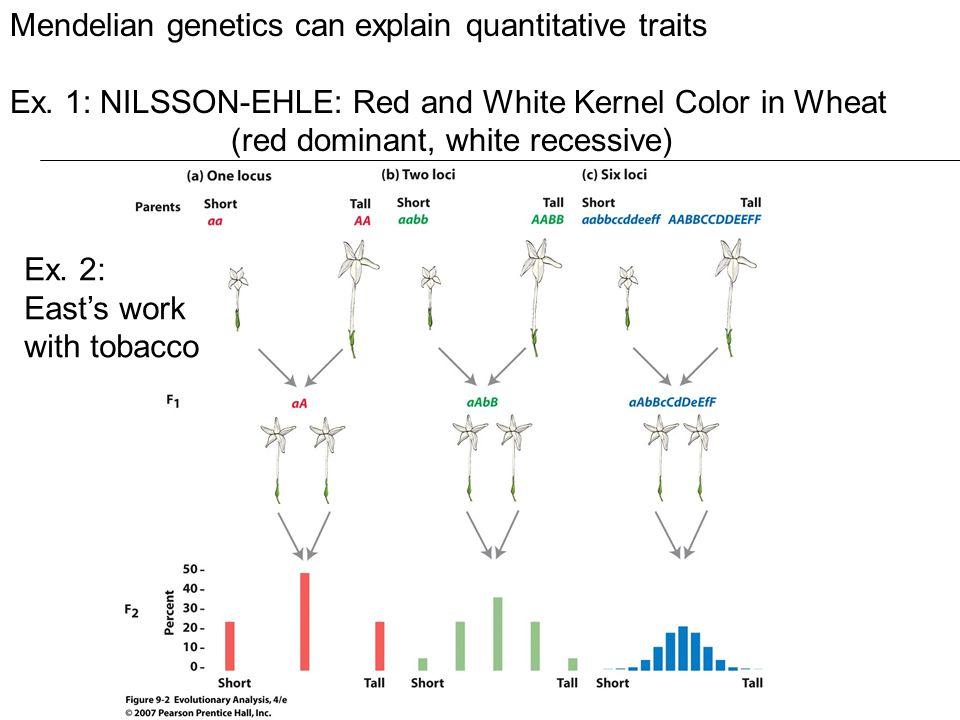 Mendelian genetics can explain quantitative traits Ex.